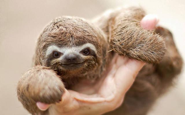 迷之微笑:你没见过的动物笑脸