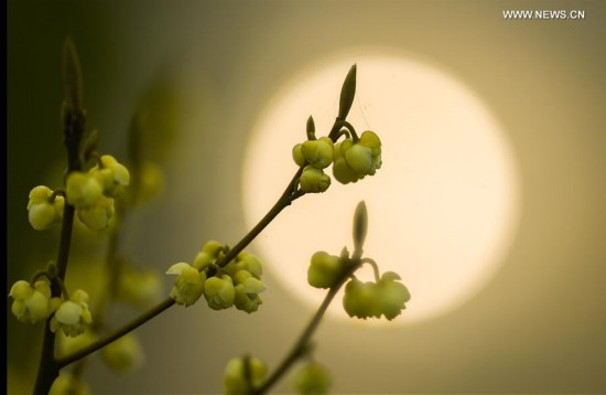 Spring returns to Chinese land as temperature rises in recent days (4)