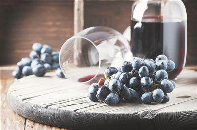 自主选育酿酒葡萄 冬不入土夏耐干旱