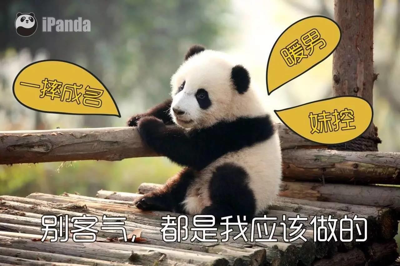 壁纸 大熊猫 动漫 动物 卡通 漫画 头像 1280_852