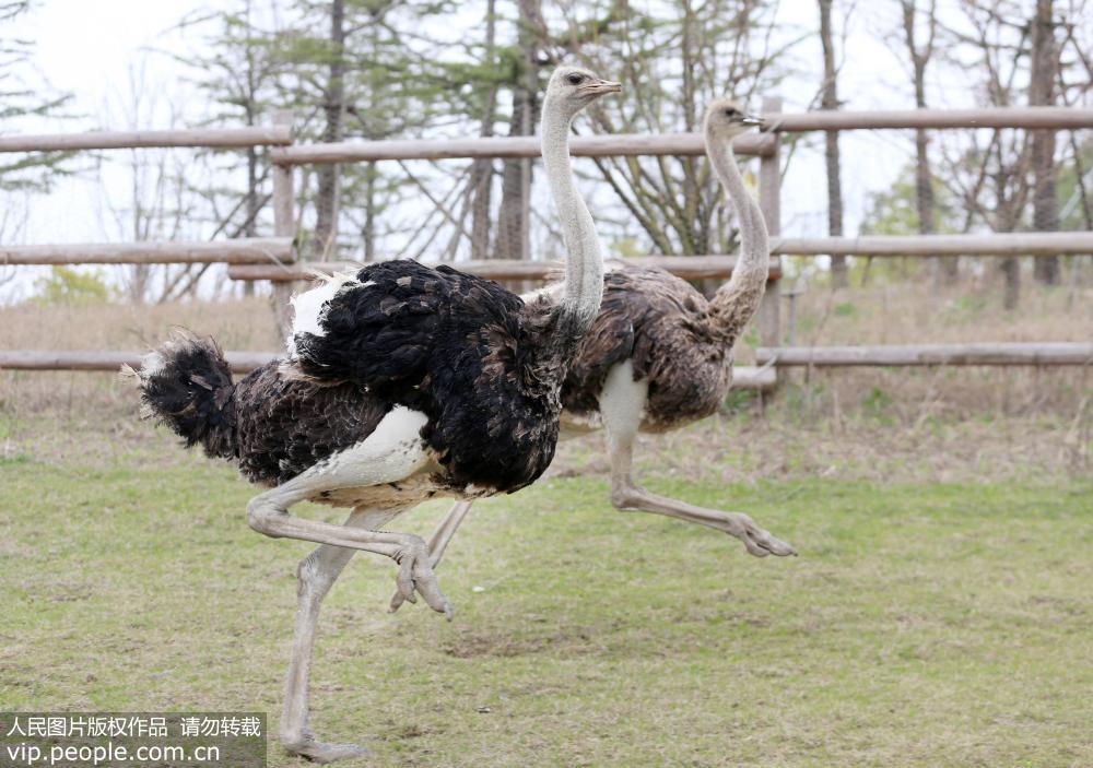 江苏南通:动物园新生松鼠猴,小袋鼠与游客见面