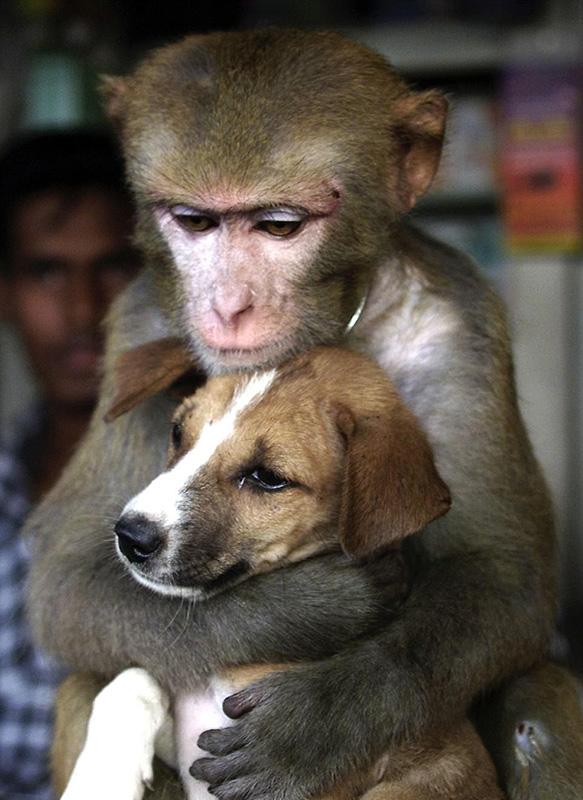 """友谊无种族!动物届""""不可能""""的美妙情缘"""