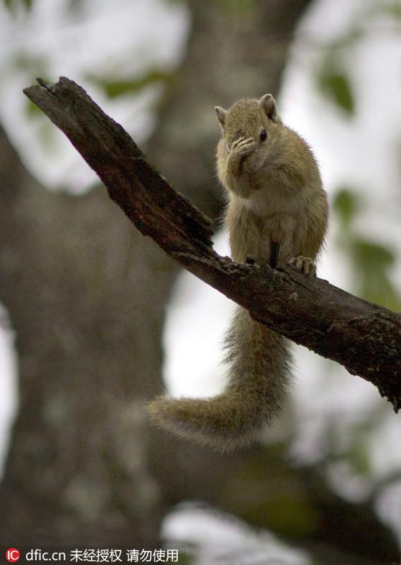 一只可爱的小松鼠低着头,双手紧握,看上去似乎是做了错事,正在祈祷