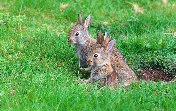 这也是现代穴居动物的尾巴总是很短的原因,比如兔子,獾和鼹鼠.