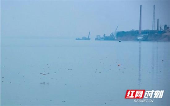 调研队员将此地水域称为江豚湾,因为水流缓慢,营养物质丰富,鱼类繁多,是水鸟的栖息地。